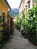 Street of Flowers - Marciana, Elba