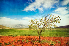 (Victoriano) Tags: life sky hot tree green nature colors landscape countryside early spring colours wheat country almond granada springtime earlyspring almondtree flogr wearepaisaje
