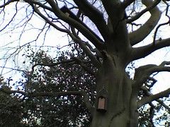 Selly Oak Bird House