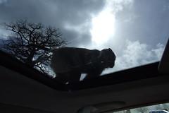 Longleat Safari Park #29