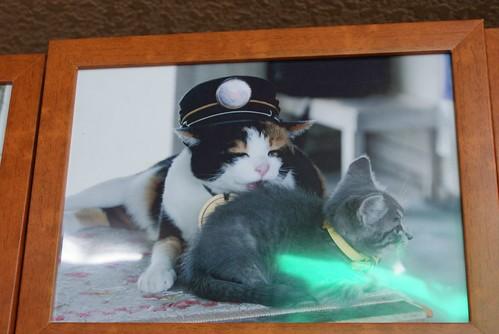 スーパー駅長タマは里親ネコでもあるの。医者が見放した子猫を、一晩中舐めてあげて、元気になったのよ