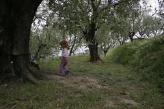 rondolivier