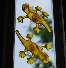 Tokek Belanda... (tokek belanda (very busy)) Tags: window yellow geel raam gekko transparant belanda tokek