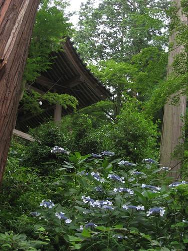 Shikoku pilgrimage(81 Shiromineji temple,白峯寺)