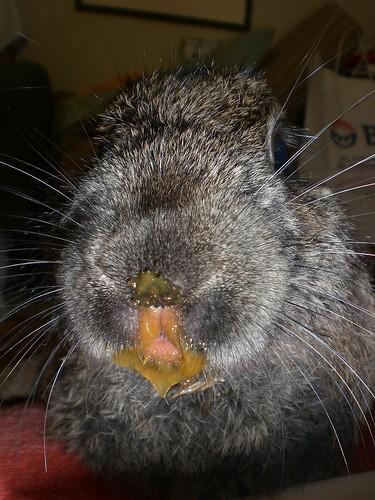 HUH? i didnt eat nutin'...