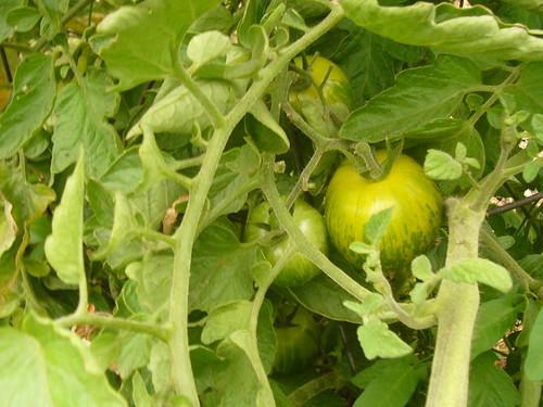Garden 2008.7.18 - 10