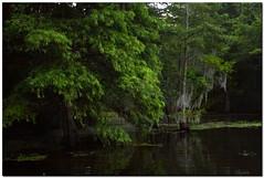 Bayou Country (Mr. Greenjeans) Tags: trees green nature water landscape louisiana bayou spanishmoss cypress mrgreenjeans gaylon canonef28135mmf3556isusm lakeverret gaylonkeeling