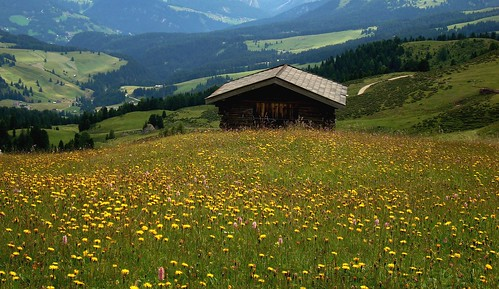 Alpe 2008