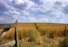England: Northamptonshire Countryside. Pathway (Tim Blessed) Tags: uk sky nature clouds landscapes countryside scenery gates wheat crops singlerawtonemapped