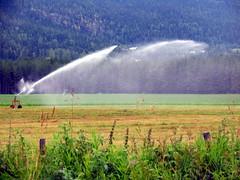 Vanning - Watering