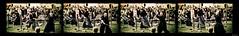 (Mariusz Sikorski) Tags: test canada heritage festival photoshop canon edmonton action martial arts alberta cutting series samurai blade katana budo mariusz sikorski 40d fukanzen tamashigiri