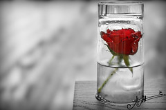 Frozen Love ,, (A.A.A) Tags: red white black cold love ice cup water glass rose by canon cutout photography frozen mark iii redrose iced aaa irresistible eos1ds missingu canoneos1dsmarkiii amnaaalthani hawaalrayyanfav