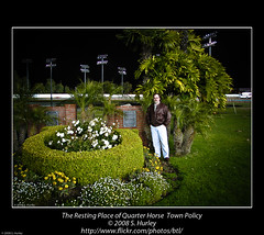 The Resting Place of Quarter Horse  Town Policy
