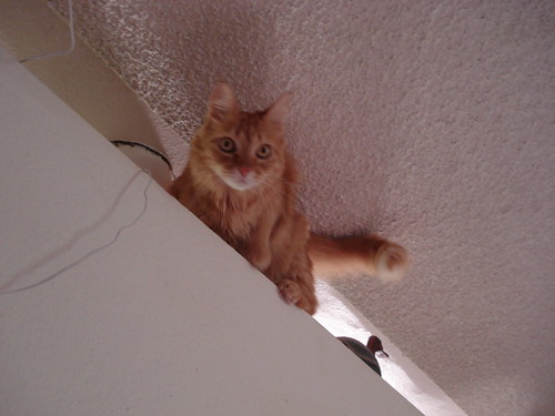 Hmm...how did I get up here?