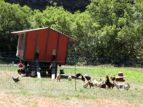 A mobile chicken coop at Pie Ranch
