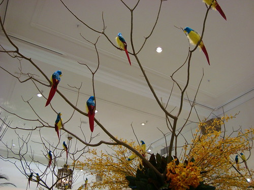 Birds in David Jones