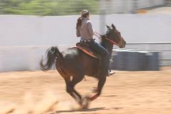 Prova dos 3 Tambores (Robson Borges) Tags: brazil brasil areia arena cavalo esporte tempo corrida prova dama goinia gois chapu bota cavaleiro chicote competio peo esporas botina equitao hipismo provados3tambores derrubar robsonborges