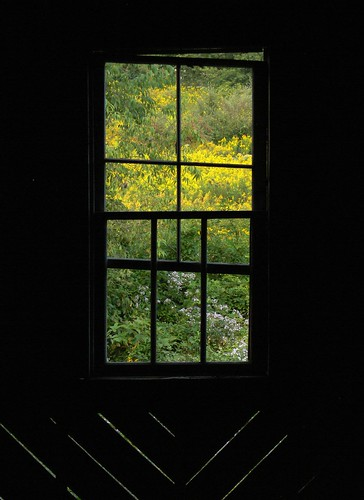 Window to the Wildflowers
