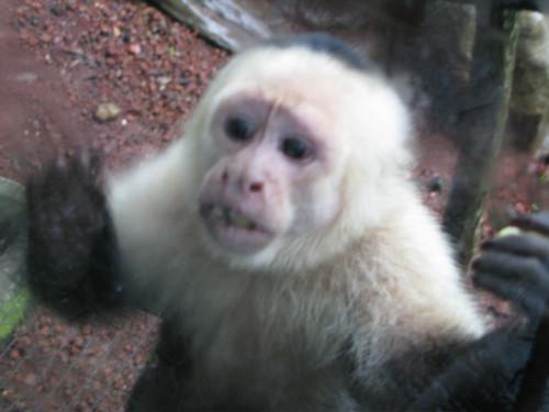 Outbreak Monkey Pictures, Images & Photos | Photobucket