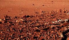 Drought Victim (Bugalugsrox) Tags: red dead death sand rocks desert australia drought kanagaroo tanami