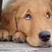 子犬:Little Dax