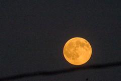 DSCF7751 Full Moon on a Wire (Sally Van Natta) Tags: home fullmoon karma salvan ultimateshot photostosmileabout betterthangood auclairedelalune photosofqualitytosmileabout