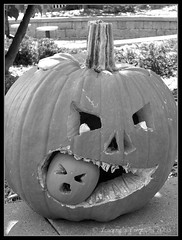 crunch (lorainedicerbo) Tags: decorations blackandwhite bw halloween pumpkin zoo royaloak detroitzoo zooboo citrit