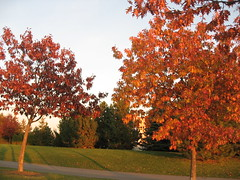 Final evening light on the final leaves of trees (zJMac) Tags: park autumn trees light sunset red sky plant ontario canada color colour green fall nature grass leaves standing canon evening daylight leaf colorful day shadows view bright grove dusk ottawa hill watching sunny glen hidden lonely placement sunsetlight zjmac