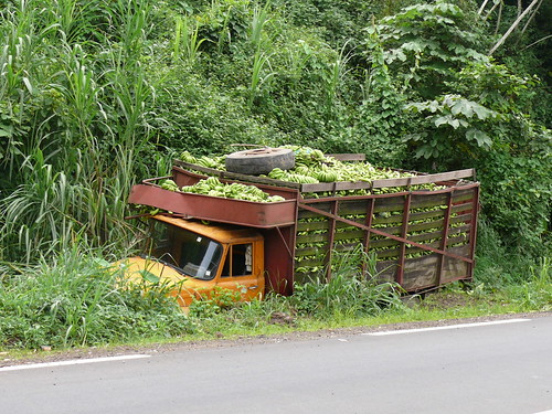 Bananas in the truck in the ditch
