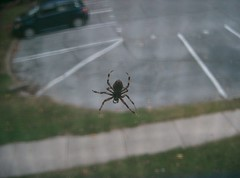 GIGANTIC SPIDER