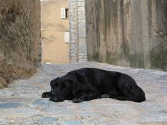 Corsica - Black dog (Been Around) Tags: france frankreich europe corse corsica francia corsican korsika worldtrekker france2008