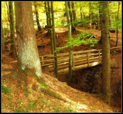 Autumn in the deep Forest - Magical Bridge - Adelberg, Germany (Batikart ... handicapped ... sorry for no comments) Tags: wood travel bridge autumn trees brown sun plant tree green fall nature leaves architecture fairytale forest canon germany season landscape geotagged deutschland landscapes wooden leaf interestingness flora europa europe footbridge earth herbst natur pflanze f100 foliage explore architektur romantic greenery geology grn braun brcke blatt holz landschaft sonne wald bume baum landschaften canonpowershot pedestrianbridge a610 geologie badenwrttemberg swabian gppingen canonpowershota610 10000views 100faves 50faves i500 200faves adelberg viewonblack 300faves colorphotoaward batikart fusgnger fusgngerbrcke herrenbergstausee bestcapturesaoi 201204