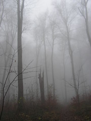 Fog (Horányi Mari /very busy/) Tags: trees fog hungary hiking hills excursion abigfave pilishg