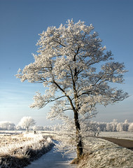 It's been a while.... (Danil) Tags: winter holland tree ice netherlands dutch landscape nikon daniel nederland groningen leek 2007 chirtmas grozen