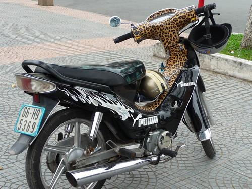 Leopard skin puma style