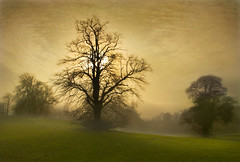 Beautiful winters morning (adrians_art) Tags: trees winter sky mist weather fog frost shadows impressedbeauty vosplusbellesphotos