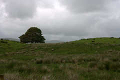 hill tree (Lets Bike It (Howard D Mattinson in Canonbie)) Tags: scotland land boundary dumfriesshire debatable canonbie