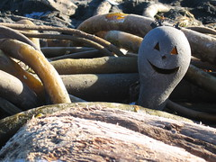 Kelp-O-Lantern