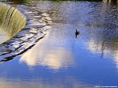 Light on the weir 2 (Steve-h) Tags: blue ireland sky dublin white clouds reflections duck europa europe eu finepix fujifilm weir steveh riverdodder s9600 megashot