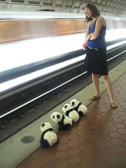 make way for panda (petit hiboux) Tags: print washingtondc hilarious kate redline dcmetro weekendgetaway pandamonium formerpresidents april2008 clevelandcoolidgefillmoreandpolk