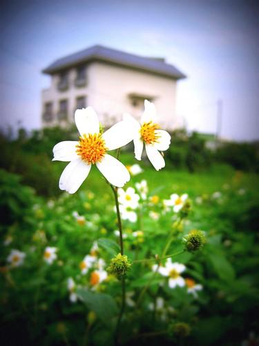 Flower Lomo