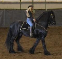 Friesian 2 (Equine-Friends.com) Tags: horses expo exhibition mounted archery arabian stallion equine friesian haflinger breeds dressage mangalorga marchadore