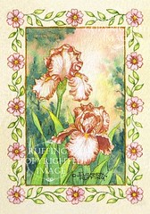 """Peach and White Iris"" ER25 by Elizabeth Ruffing Miniature"