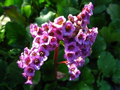 AWITP_June7_08_66.jpg (Adrian J.K. Shum, CGD) Tags: nature winnipeg florafauna muhsashumblogspotcom