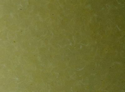 closeup microworms