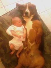 Basset with baby