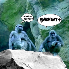 Fight This Generation (fakebook) Tags: music animals pavement bronxzoo gorillas photoshoppery woweezowee iminlovewiththatsong
