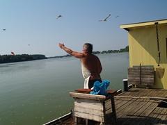 a sirályok is szeretik / the seagulls like this (.e.e.e.) Tags: county people nature work river hungary seagull olympus fisher duna job danube donau dunav paks e400 mywinners tolna