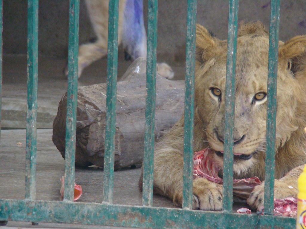 The World's most recently posted photos of lahore and lion