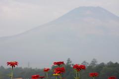 Aug morning near Mt. Fuji (kurokojpn) Tags: flowers japan tokyo orlando swans mountfuji   kuroko canon40d photosjapan kurokoshiroko kuroko01 kurokoshiroko photographytokyo photostokyo bestoftokyo tokyobest orlandojpn thetokyopost kurokojpn